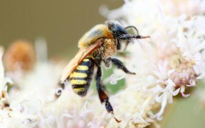 Un oasis para las abejas