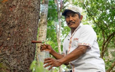Aprovechamiento sostenible de copaibo