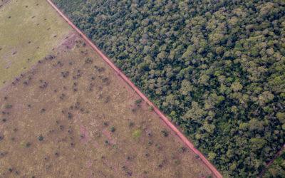 ECCOS apoya investigaciones acerca de la pérdida de cobertura natural en Santa Cruz